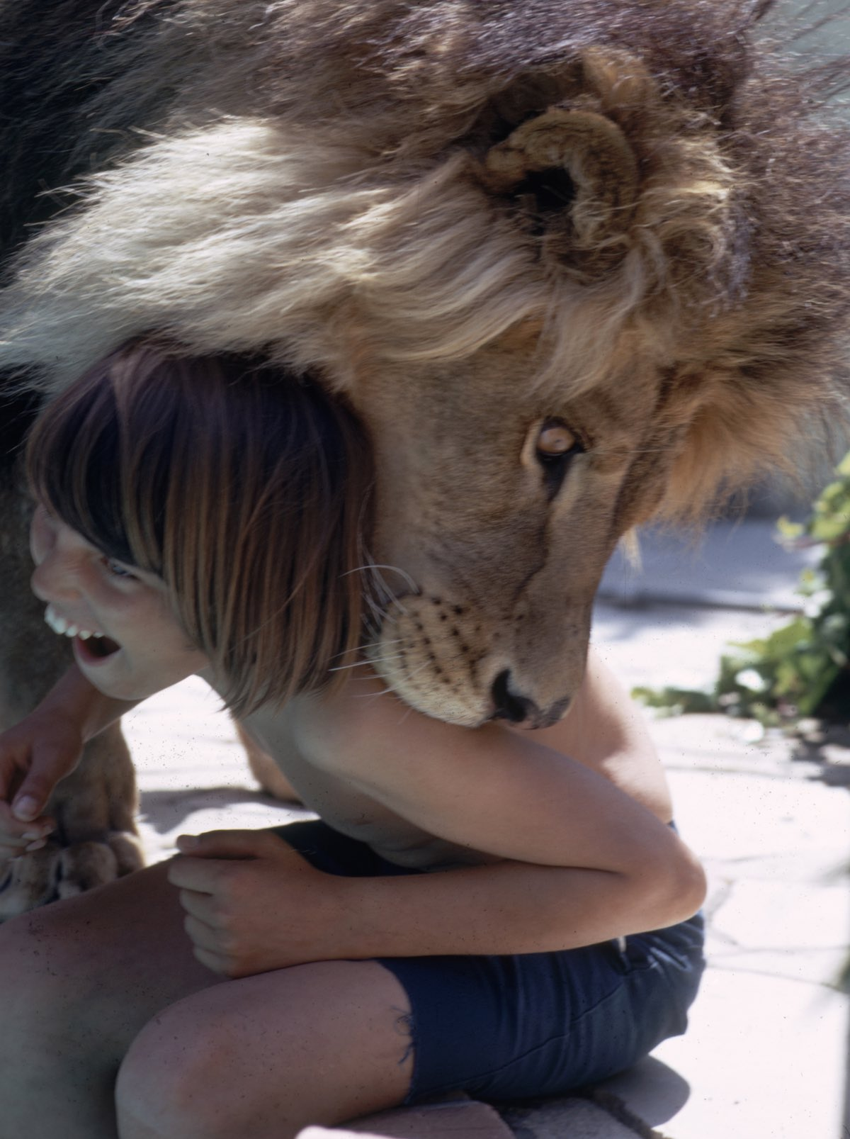Neil The Lion & Child