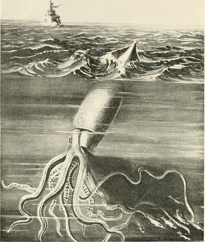 kraken sea photo
