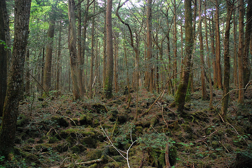 Aokigahara Forest photo